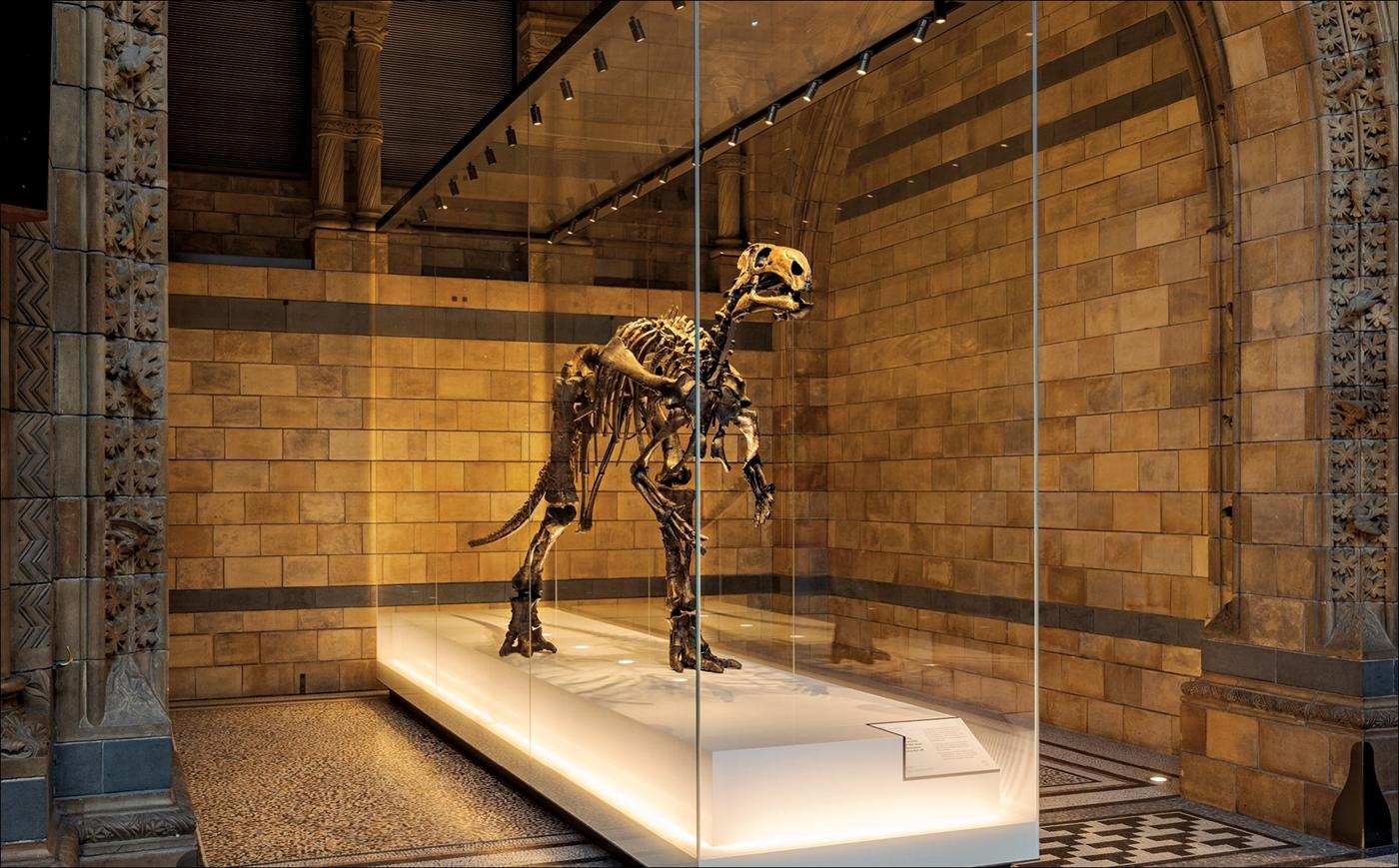 نظرة جديدة إلى الديناصورات