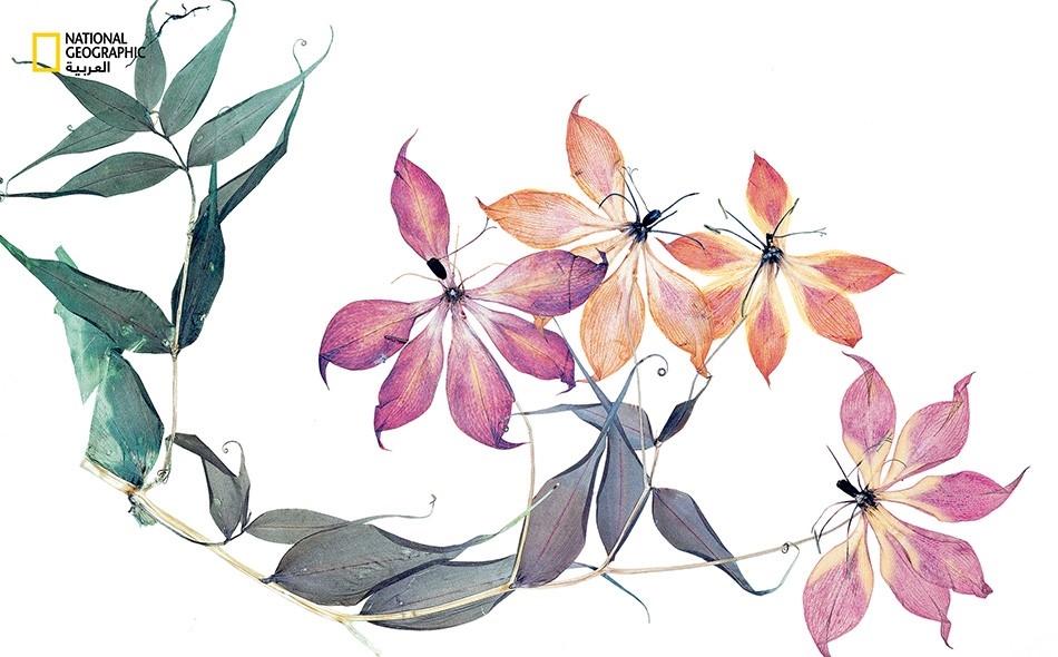 دائمات الإزهار والازدهار