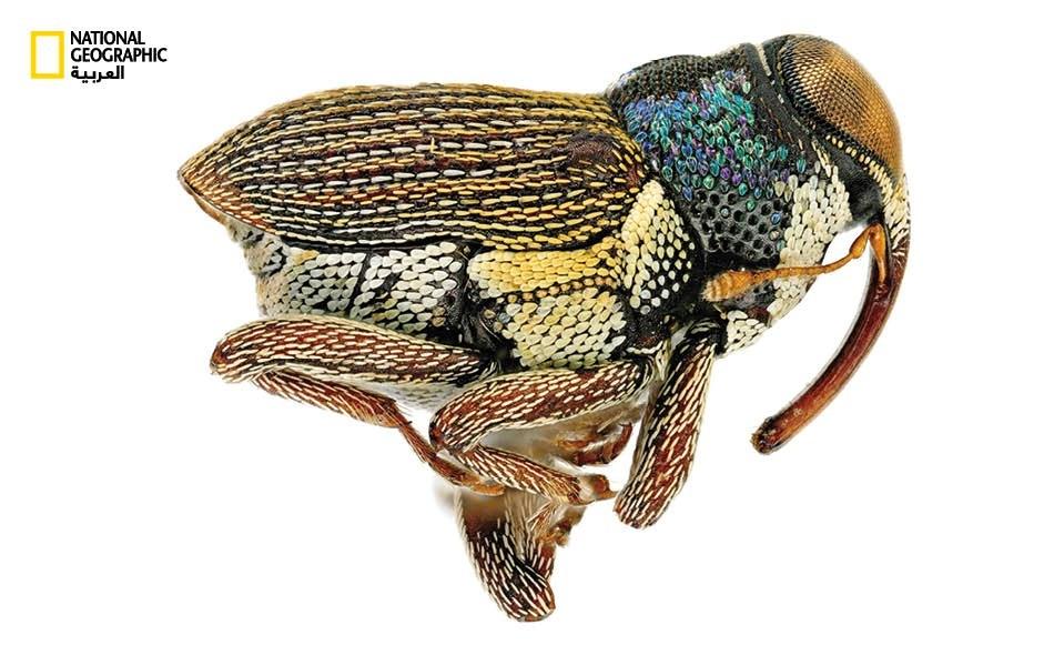 حشرات الأعالي