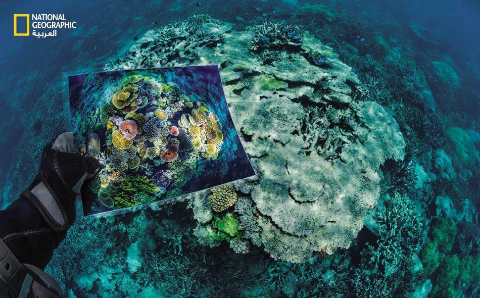 إنقاذ الشعاب المرجانية