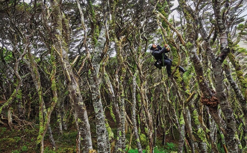 بحثًا عن شجرة الجنوب