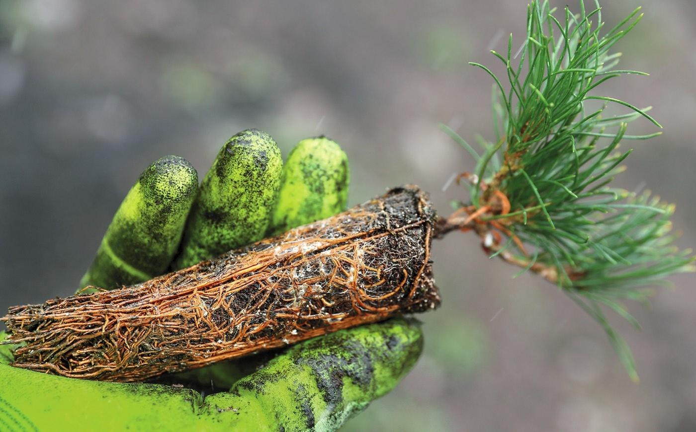 زراعة الأشجار     شتلات لتحقيق هدف 2030