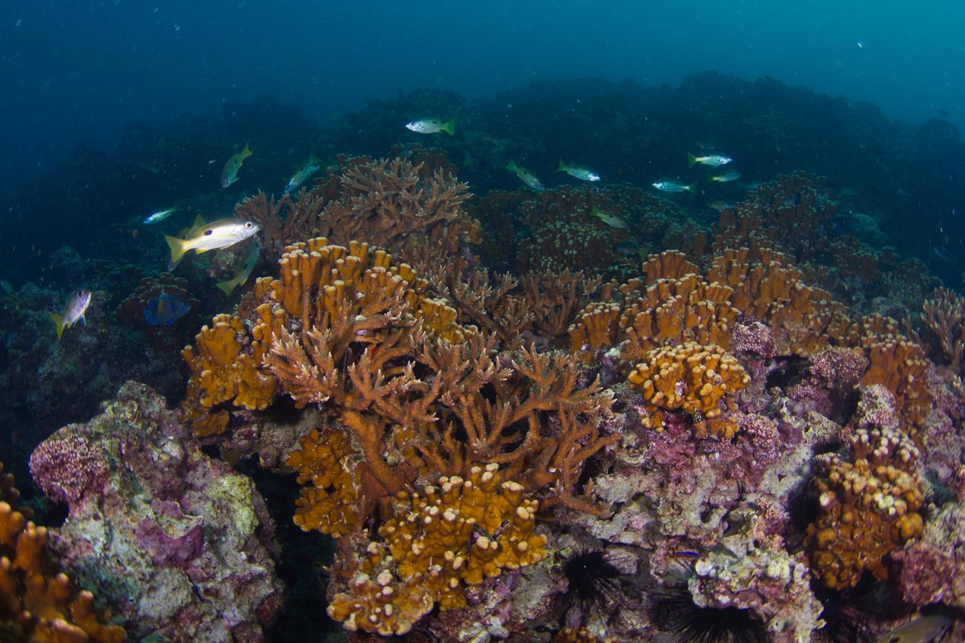 استزراع أكثر من مليون مستعمرة شعاب مرجانية في أبوظبي