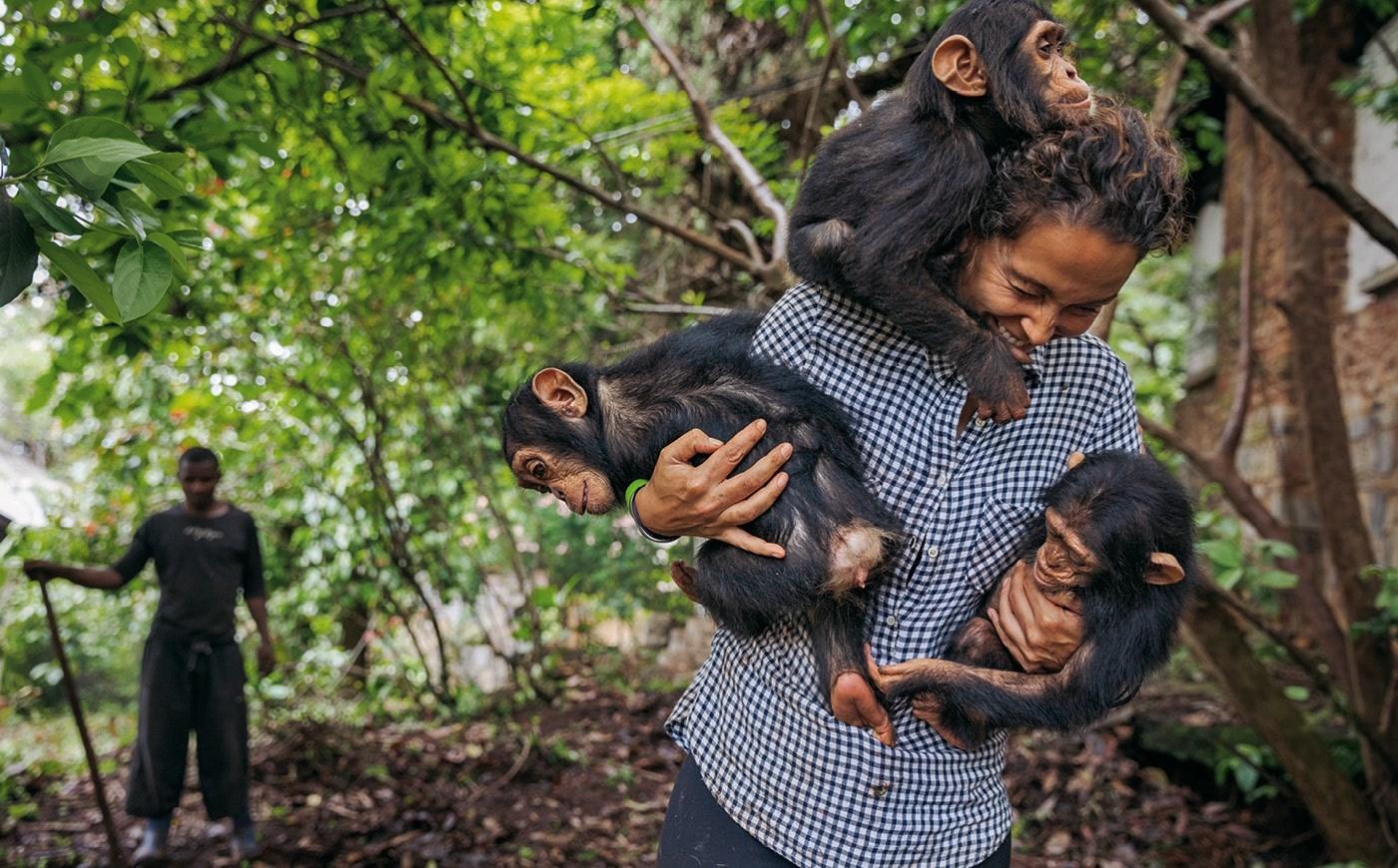 إنقاذ الشمبانزي وجني الأمل.. في بؤر التوتر