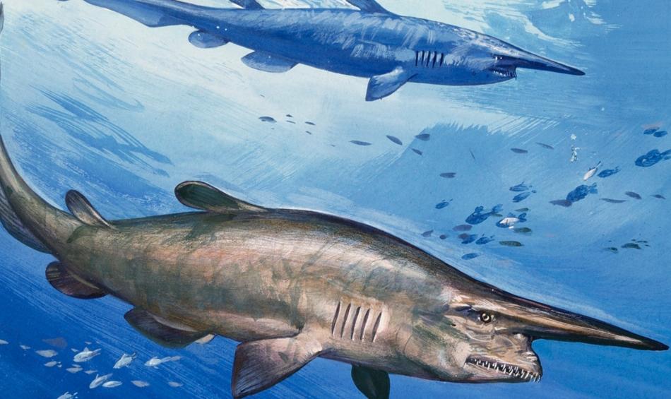 سمكة قرش العفريت