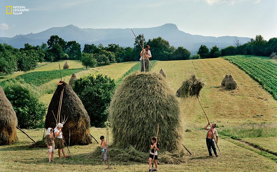 ينتمي جميع أفراد عائلة بوركا إلى قرية بريب، وهم يضعون اللمسات الأخيرة على إحدى أكوام القش الأربعين التي يجمعونها كل صيف.