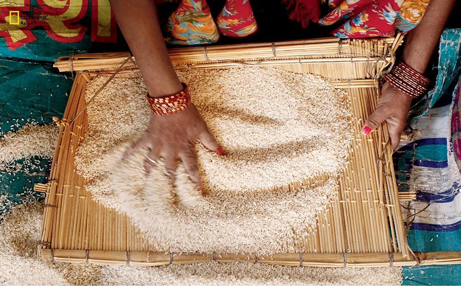 الأرز.. ثــم الأرز
