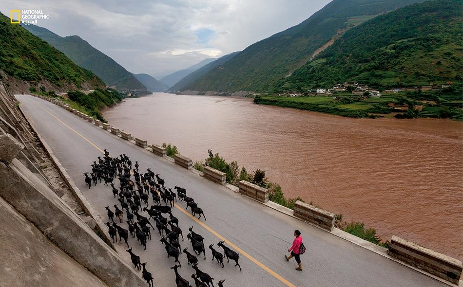 """الصين أغرقت السدود الجديدة وخزاناتها المدنَ والمزارع والطرق الواقعة على الضفاف. تُساق قطعان الماعز على طول حوضٍ أنشأه سد """"غونغيوكياو"""" إلى المرعى بالقرب من طريق سريعة جديدة شُيدت على أرض مرتفعة."""