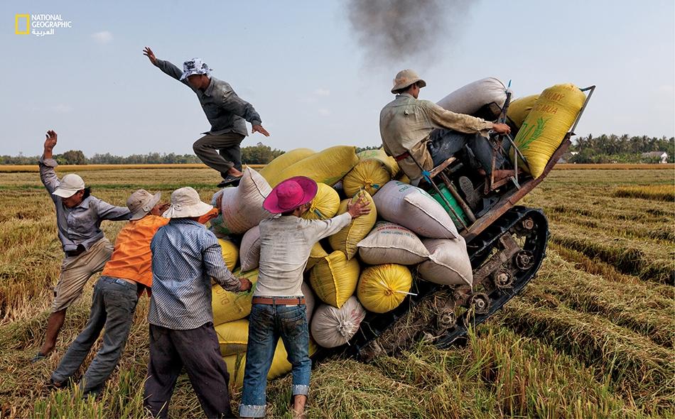 فيتنام يوشك جرار في دلتا الميكونغ أن يُسقط حمولته من الأرز إذ فقد توازنه من فرط ثقلها. أتاحت منطقة الدلتا لفيتنام أن تصبح من أكبر مصدري الأرز بفضل دفء المنطقة ورطوبتها وخصوبتها برواسب النهر.