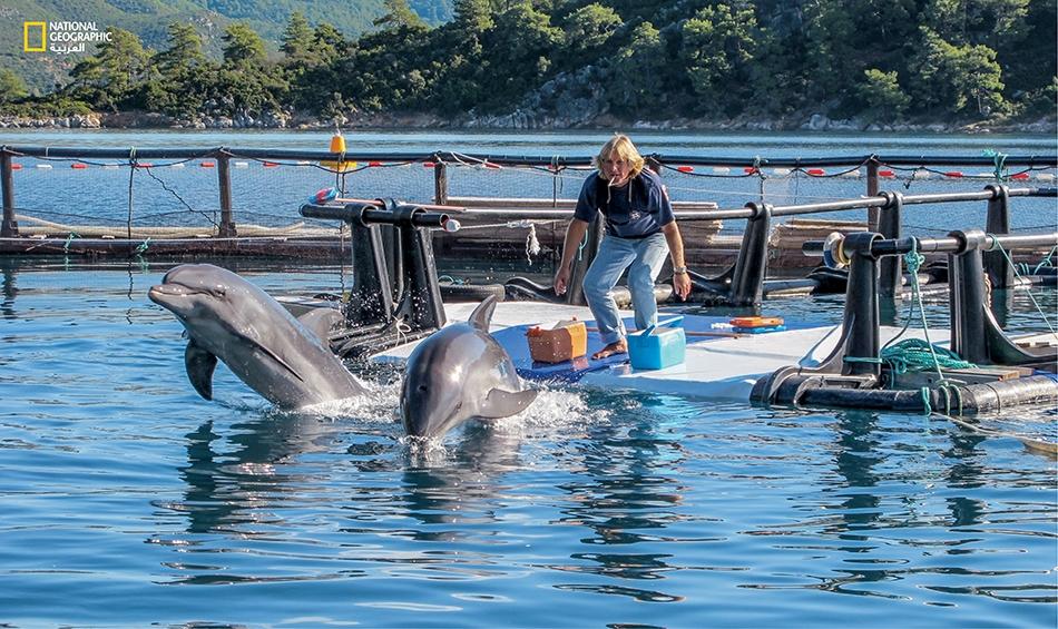بإيعازٍ من كبير المدرّبين، جيف فوستر، ينطلق الدلفينان توم و ميشا في تدريب مجهد على السباحة السريعة. تفقد الدلافين الأسيرة لياقتها مع الزمن، وبدلاً من أن تمضي جلّ وقتها في الصيد أو السباحة، فهي تمضيه عند سطح الماء أو قريباً منه.