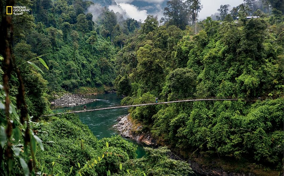 جسر ممتد فوق نهر تاماي على الطريق إلى سفح الجبل. أمضى المتسلقون أسابيع يشقون طريقهم عبر الغابة المطيرة الكثيفة، وهم يحاذرون الثعابين ويعانون من رهاب الأماكن الضيقة في دروب مظلمة أشبه بالأنفاق.