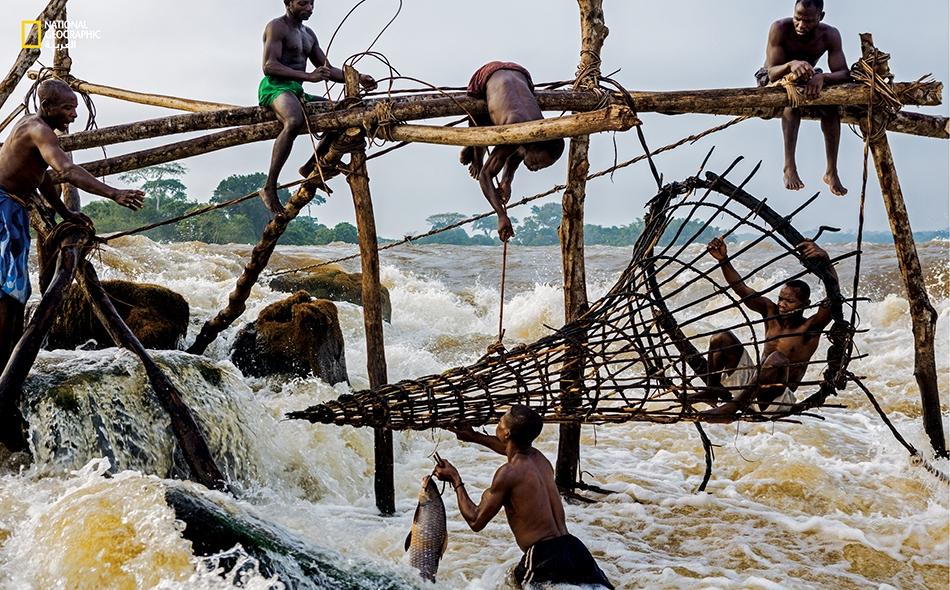 """ما زال صيادو السمك من قومية """"الواغينيا"""" يصنعون شراكاً ضخمة لصيد السمك في التيّارات السريعة العكرة على أطراف كيسانغاني تماماً كما كانوا يفعلون عندما شاهدهم المستكشف """"هنري مورتون ستانلي"""" أول مرة خلال رحلته الشهيرة إلى أسفل مجرى النهر عام 1877."""