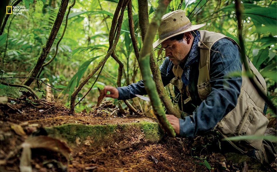 """عالم الآثار، أوسكار نيل كروز (الصورة العليا)، يزيح بعناية شديدة حشائش الغابة ورواسبها عن حجر، لحظات قليلة بعد أن وصل إلى البقايا الأثرية في """"موسكيتيا""""."""