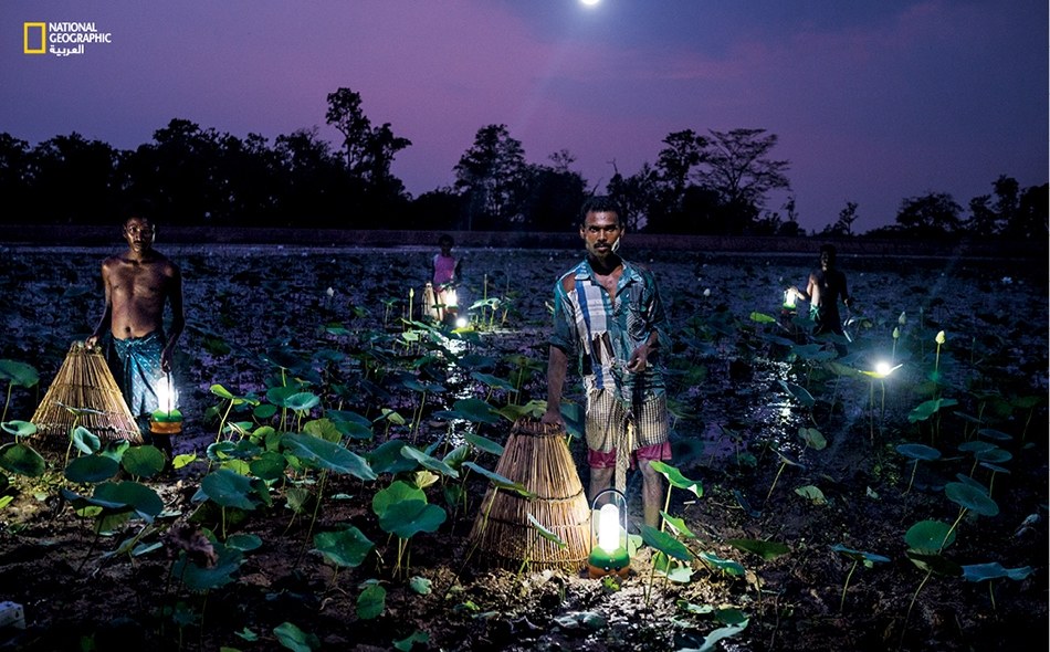 """يصطاد أهالي القرى بولاية """"أوديشا"""" الهندية السمكَ باستخدام سلال مخروطية الشكل، وبالاستعانة بمصابيح تعمل بالطاقة الشمسية. لا يستخدم شبكة الكهرباء الرسمية في الولاية سوى أقل من نصف عدد سكانها البالغ 42 مليون نسمة."""