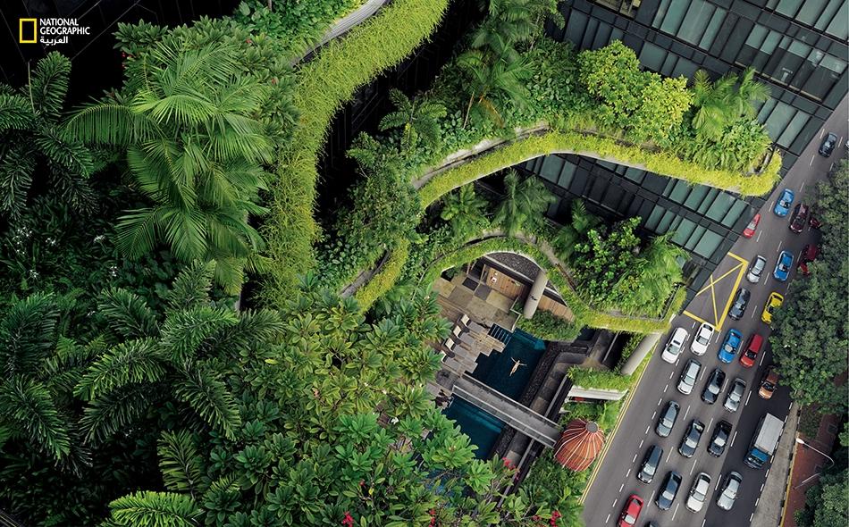 """في سنغافورة، التي تسعى لأن تكون """"مدينة ضمن حديقة""""، تساعد النباتات التي تكسو فندقاً فخماً على إراحة أعصاب أحد النزلاء في مسبح جُعِل بشرفة الفندق؛ كما أنها تبعث البهجة في نفوس الناس بالشارع. كان """"لي كوان يو""""، رئيس الوزراء الأسبق، قد قال ذات مرة """"إن..."""