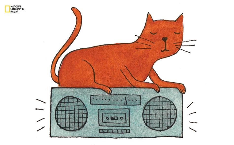 سمفونية القطط