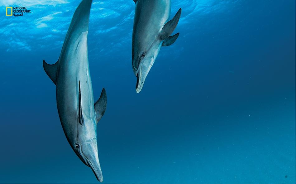 """كثيراً ما تظهر إلهة الحب """"أفرودايت"""" برفقة الدلافين في أساطير الإغريق وفنونهم."""