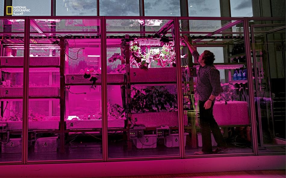 يقول هاربر إن أكثر طريقة يعوَّل عليها لزراعة المحاصيل الغذائية في المدن مستقبلاً قد تكون توفير أمثل الشروط لنموّها داخل علب أو مستودعات.