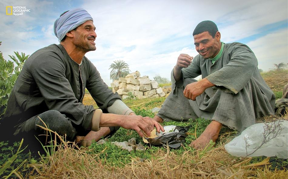 """الفلاحان صابر وحمادة يقتسمان برضا لقمة فطور صغيرة """"في الغيط""""، في مدينة ملوي بمحافظة المنيا."""
