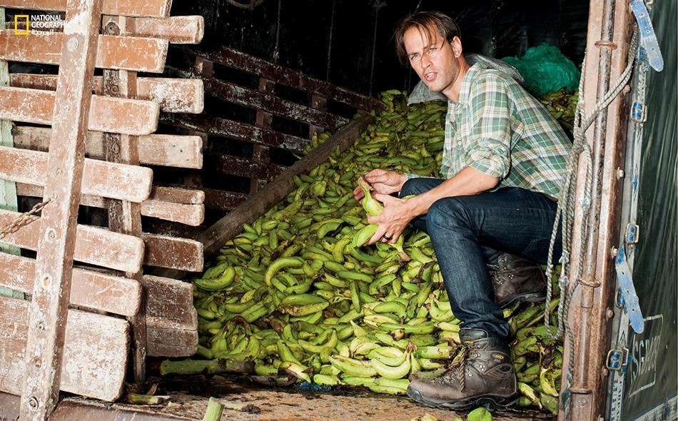"""غير بعيد عن مدينة """"أبارتادو"""" الكولومبية، يفحص الناشط """"تريسترام ستيوارت"""" شحنة موز رفضتها السوق الأوروبية بسبب قصره أو طوله أو شكله المقوس. يستهلك السكان المحليون بعض الكميات من الموز المرفوض، لكن المزارعين هنا يلقون في كل سنة بملايين الأطنان من الفاكهة..."""