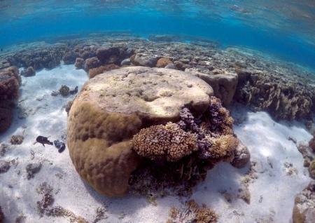 شعاب مرجانية في منطقة الجاحز المرجاني العظيم في استراليا.