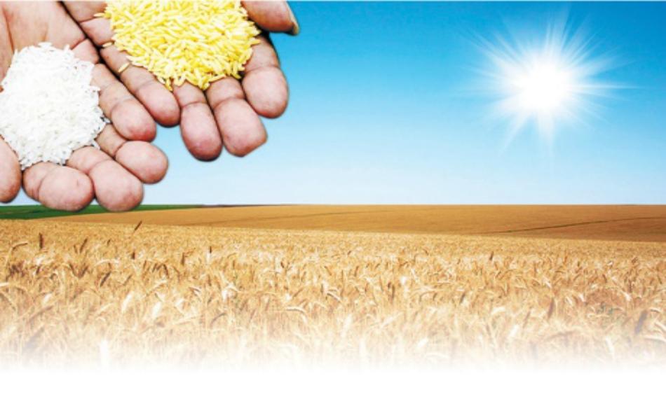 ابتكار طرق جديدة للزراعة بات حاجة ملحة.