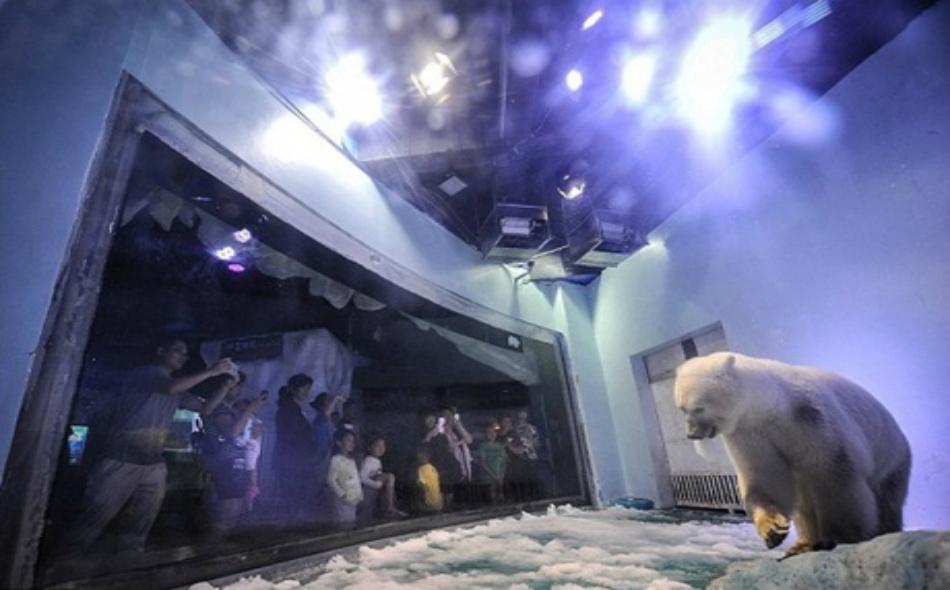 الدب يبدو حزيناً داخل قفصه بحديقة مركز غراندفيو في غوانجو الصينية.