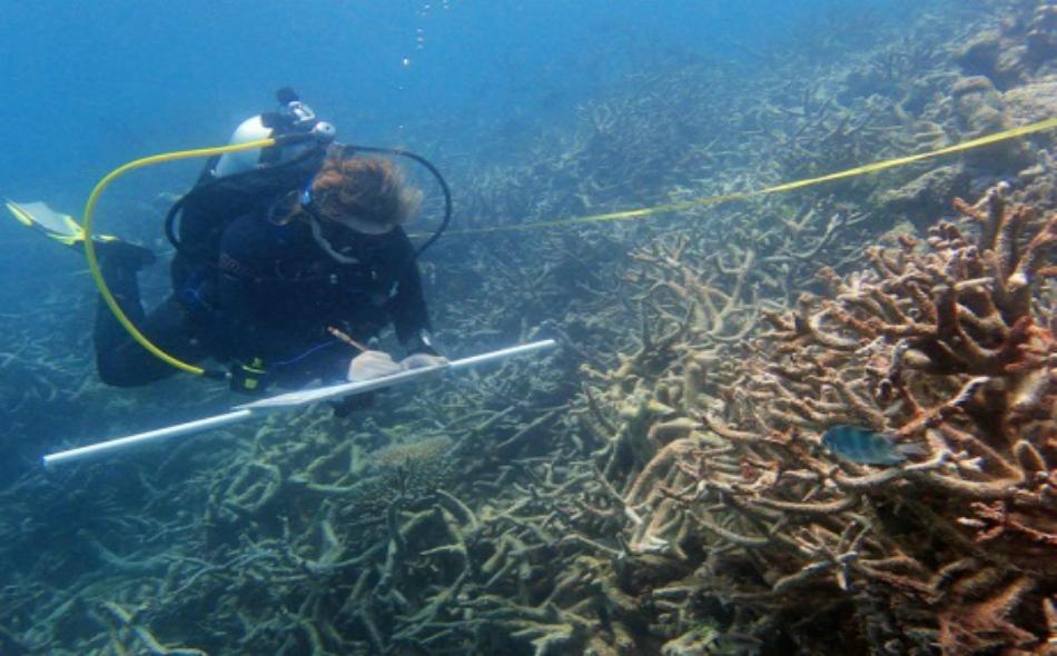 باحث يسجل ملاحظاته عن ابيضاض المرجان أثناء مراقبة الظاهرة في الثلث الشمالي من الحيد المرجاني.