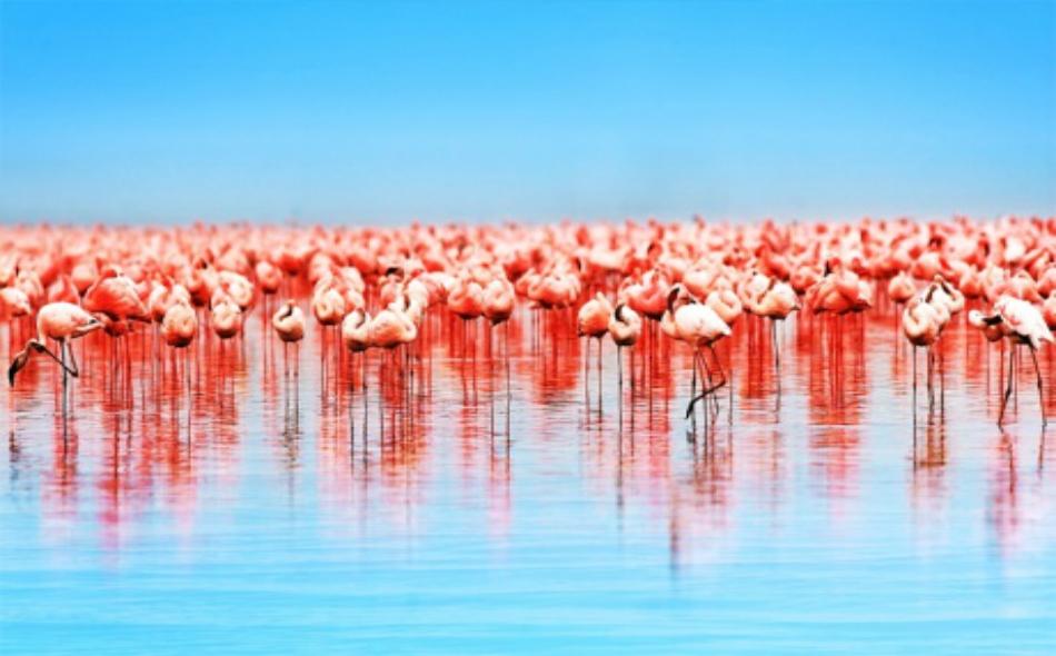 تضم 55% من أنواع الطيور في دولة الإمارات.