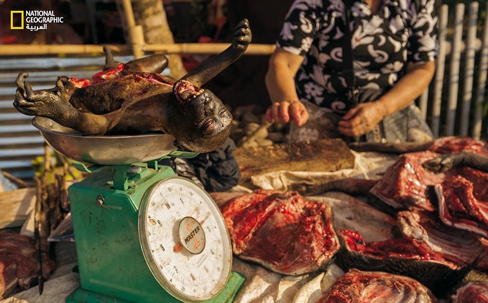 """قرد رضيع مذبوح، وُضع على ميزان بمحل جزارة في سوق بلدة """"تومباسوبارو"""".. في مشهد يراه بعض الناس مروعاً، ويراه آخرون أطباقاً شهية على موائدهم."""