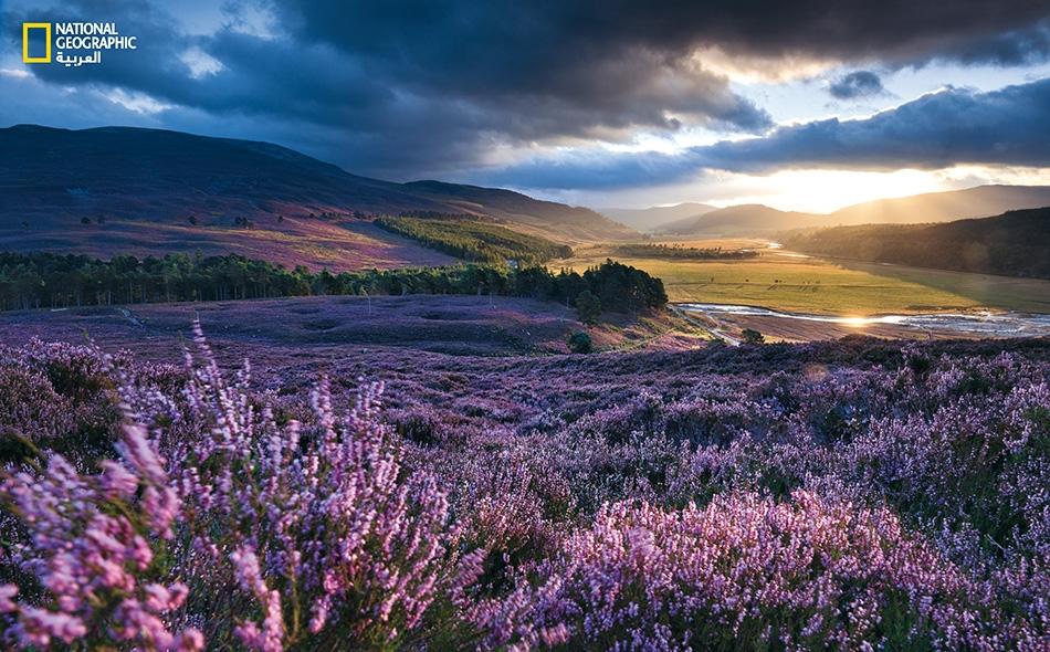 ريف إسكتلندا