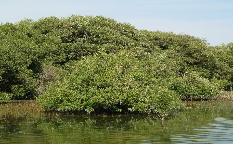 توفر الموائل الساحلية المتمثلة في غابات القرم والأعشاب البحرية والسبخات الملحية في إمارة أبوظبي عدداً لا حصر له من الخدمات الأساسية للأنظمة البيئية. الصورة: gcceportal.com