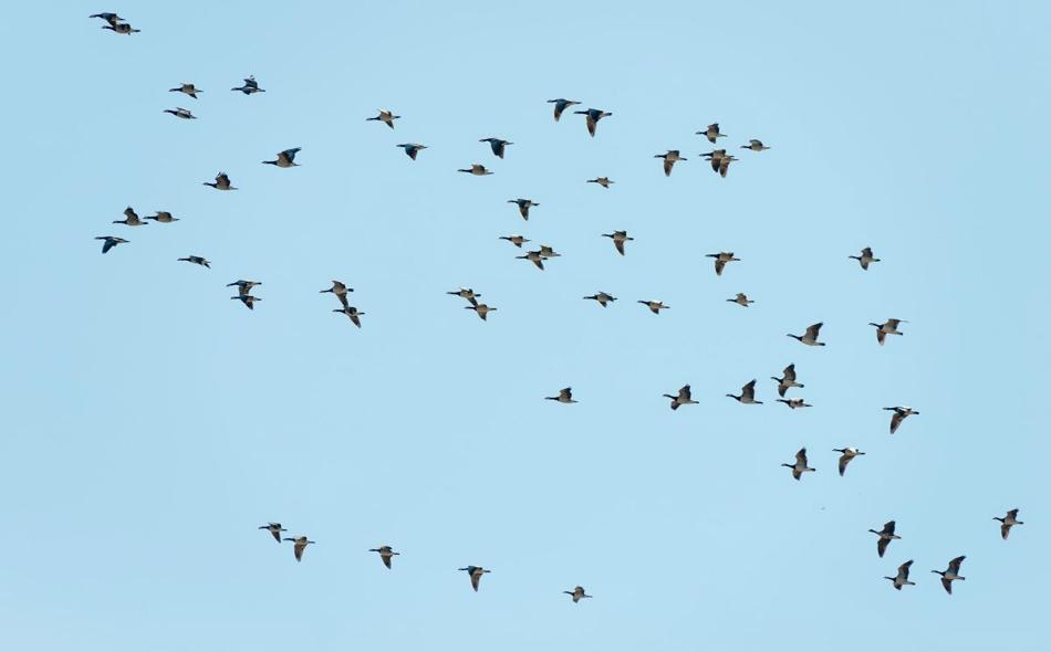"""إن الاحتفال بـ """"اليوم العالمي للطيور المهاجرة"""" هذا العام يأتي حول موضوع """"مستقبلهم هو مستقبلنا – كوكب سليم للطيور المهاجرة والشعوب"""". الصورة: Alainzoo.ae"""