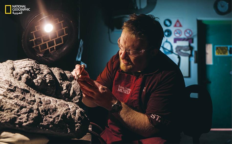 """يقوم """"مارك ميتشل""""، الفني لدى """"متحف تيريل الملكي"""" في كندا، بتخليص قدم النودوصور وباطنها المُحرشَف من الغشاء الحجري. وسيُمكّن عمل ميتشل الدقيق من الحفاظ لأعوام مقبلة على ملامح هذا الحيوان المحفوفة بالغموض."""