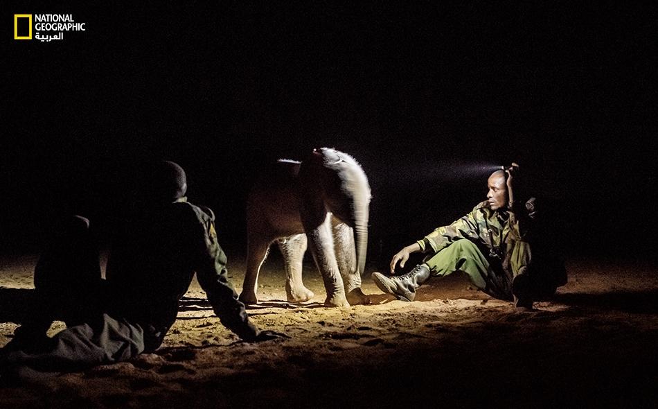 """عثرت مجموعة محاربين من قبيلة """"سامبورو"""" على أنثى الفيل الصغيرة هذه (وهي بعمر أسبوعين) في أحد الآبار التي يحفرها الأهالي بأيديهم على سطح وادٍ جاف. يسهر """"لكالاتيان لوبيتا"""" (يمين) رفقة زملائه الموظفين لدى """"ملاذ ريتِيتِي لرعاية الفِيَلة""""، على الاهتمام بها..."""