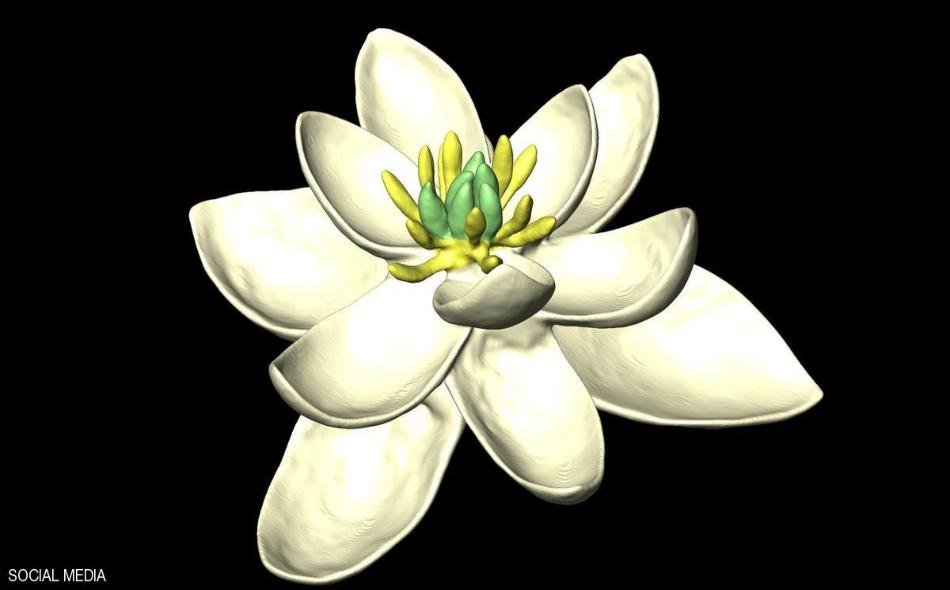 توصل مجموعة من العلماء إلى طريقة لجمع طريقة تكوين كل الأزهار الرئيسية، مما ساعدهم للتوصل إلى الشكل التكويني للزهرة الأولى في التاريخ.