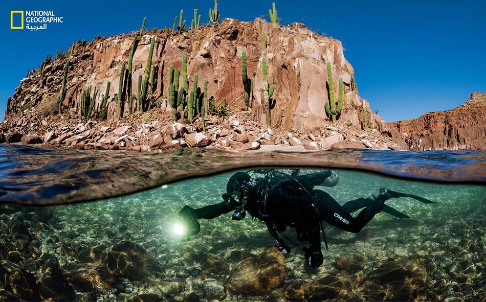 """يغطس """"أوكتافيو أبورتو"""" قرب جزيرة """"إسبيريتو سانتو"""" في خليج كاليفورنيا. يدرس عالم الأحياء البحرية هذا، العوامل التي أدت إلى نجاح بعض المحميات وفشل أخرى."""