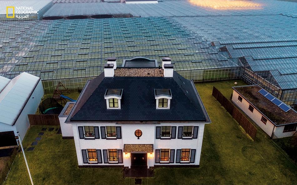 محيط من الدفيئات (بيوت زجاجية) يحيط ببيت مزارع في منطقة فيستلاند بهولندا. صار الهولنديون روادا عالميين في الابتكار الزراعي، وباتوا يطرقون أبوابا جديدة على درب محاربة الجوع.