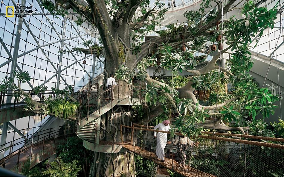 """لا تنفك دبي تبهر مريديها. ففي قبة """"الكوكب الأخضر""""، يتجول الزوار حول شجرة صناعية يبلغ قطرها 25 متراً -هي الأكبر على مستوى العالم- داخل موئل غابة مطيرة يضم ثلاثة آلاف نوع من الحيوانات والنباتات الاستوائية. تعد القبة الحيوية هذه واحدة من عدة مشروعات..."""