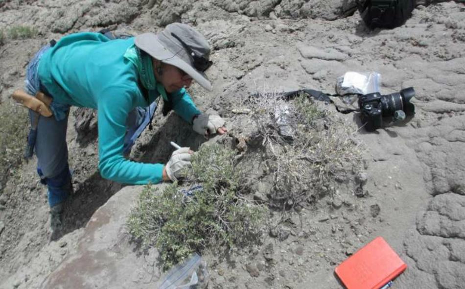 """توصل الباحثون إلى هذه النتيجة بعد دراسة فضلات متحجرة تعود إلى ديناصورات عاشت في ما يشكل اليوم ولاية """"يوتا"""" الأميركية في العصر الطباشيري (قبل 135 إلى 65 مليون سنة). الصورة: University of Colorado"""
