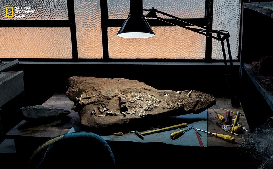 """عظام حيوان """"كيواجارا دوبروسكي"""" تنتظر دراستها في أحد متاحف البرازيل. غيَّر العثور على عدد كبير من الأحافير رأي العلماء بشأن التيروصور. يقول أحد الخبراء """"إنها ليست الحيوانات التي كنا نعتقد""""."""