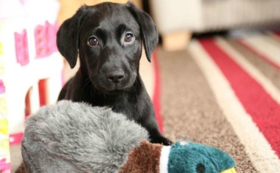 برنامج علاجي يستخدم الحيوانات الأليفة في علاج المرضى؛ نتيجة للأثر الإيجابي الذي تتركه هذه الحيوانات على صحة المرضى النفسيين.