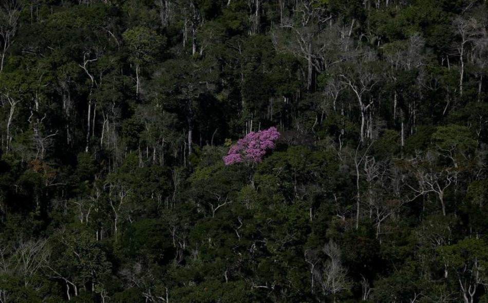 الأشجار تواجه التغير المناخي