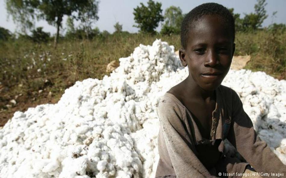 يتم قطف القطن من قبل الأطفال في جميع أنحاء العالم، خاصة في البلدان التي يعتمد اقتصادها بشكل كبير على محصول القطن.