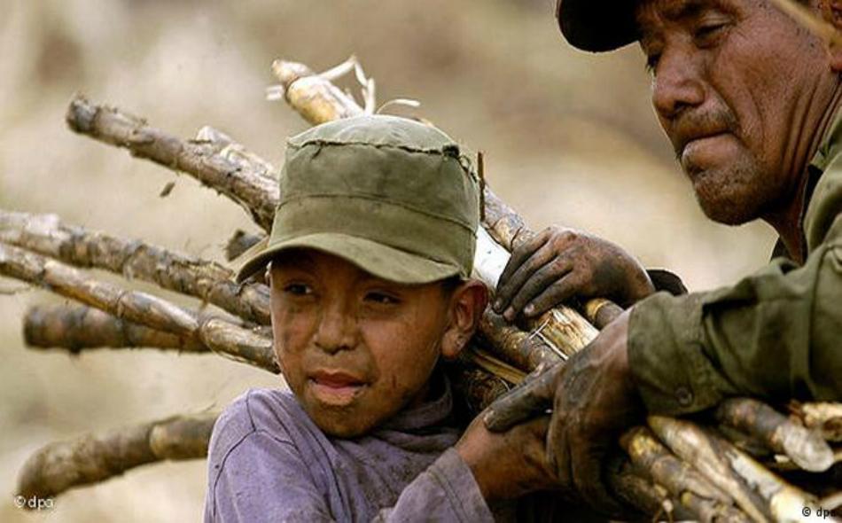 يقوم الأطفال في بلدان مثل غواتيمالا والفلبين وكمبوديا بجني محصول قصب السكر.