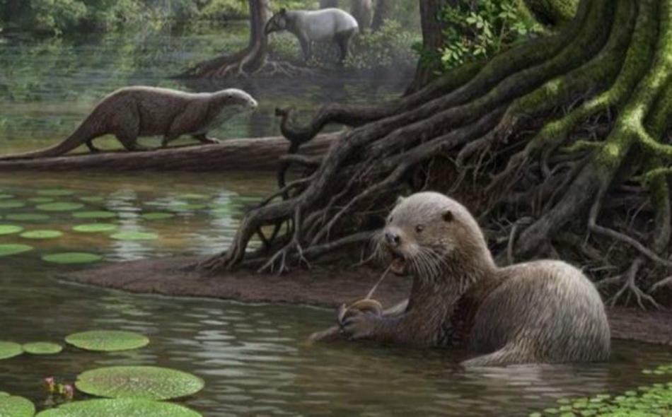 ثعلب الماء المنقرض كان يزن 50 كيلوغراما يومكنه سحق عظام الطيور بفكه القوي. الصورة: MAURICO ANTON