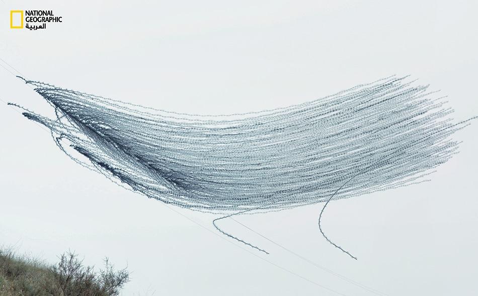 مصور يقتنص بعدسته الأشكال الخفية التي ترسمها الطيور على صفحات العلياء.