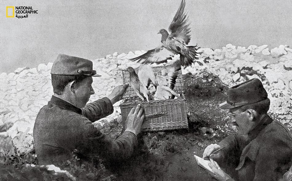 وفي الزمن القديم كانت هذه الطيور أيضاً تحمل رسائل للجنود الفرنسيين في الخطوط الأمامية خلال الحرب العالمية الأولى