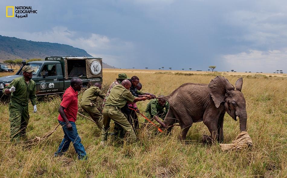 تساهم كاميرات المراقبة الحديثة في حماية الفيلة من بنادق الصيادين غير القانونيين والحيوانات المفترسة.