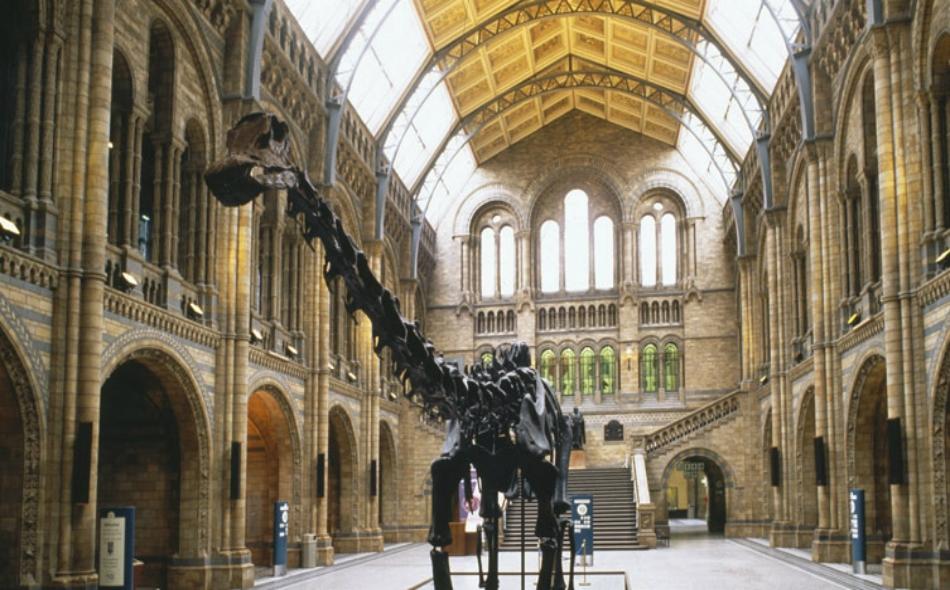 """هيكل عظمي كامل للديناصور الشهير المعروف باسم """"تيرانوصور ريكس""""، وهو الهيكل الذي يتحرك يمنة ويسرة وإلى الأمام والخلف ويطلق صوت زئير مخيف. الصورة: Natural History Museum."""